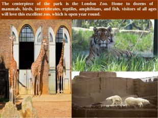 The centerpiece of the park is the London Zoo. Home to dozens of mammals, bir