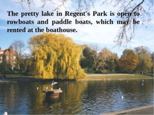 The pretty lake in Regent's Park is open to rowboats and paddle boats, which