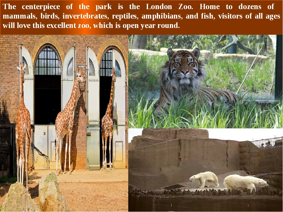 The centerpiece of the park is the London Zoo. Home to dozens of mammals, bir...