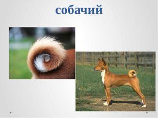 собачий