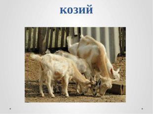 козий