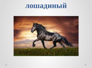 лошадиный
