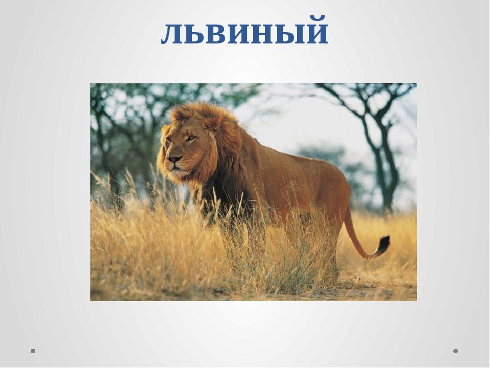 львиный