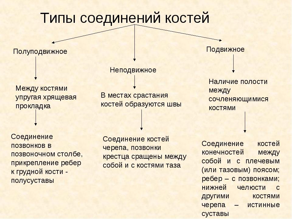 Типы соединений костей Полуподвижное Неподвижное Подвижное Между костями упру...