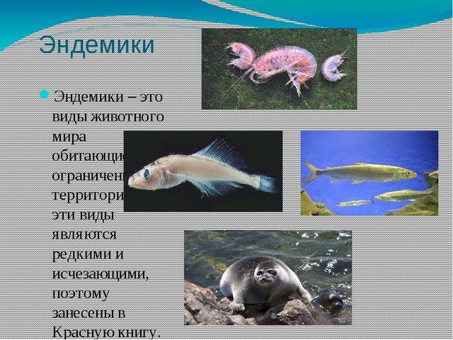 Эндемики Эндемики – это виды животного мира обитающие на ограниченной террито...