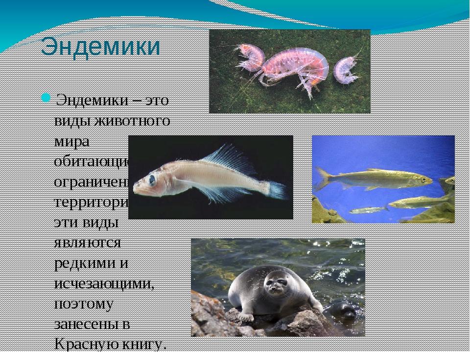 endemic species