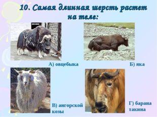 10. Самая длинная шерсть растет на теле: Г) барана такина А) овцебыка Б) яка