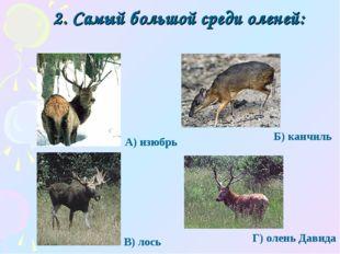 2. Самый большой среди оленей: Г) олень Давида А) изюбрь Б) канчиль В) лось