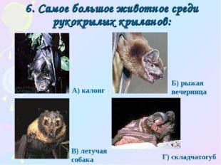 6. Самое большое животное среди рукокрылых крыланов: Г) складчатогуб А) калон