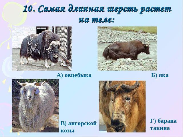 10. Самая длинная шерсть растет на теле: Г) барана такина А) овцебыка Б) яка...