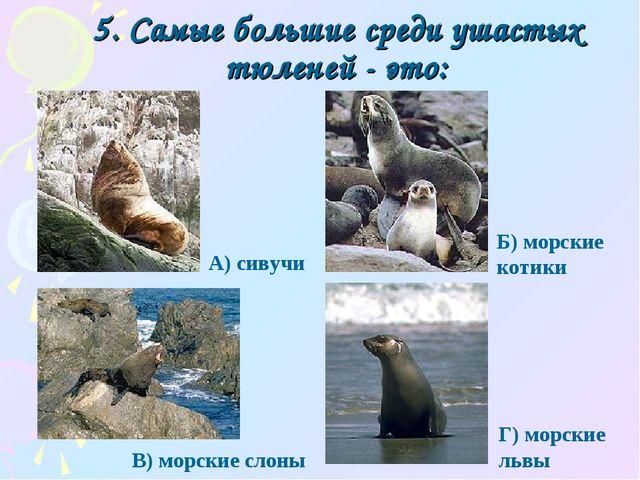 5. Самые большие среди ушастых тюленей - это: Г) морские львы А) сивучи Б) мо...