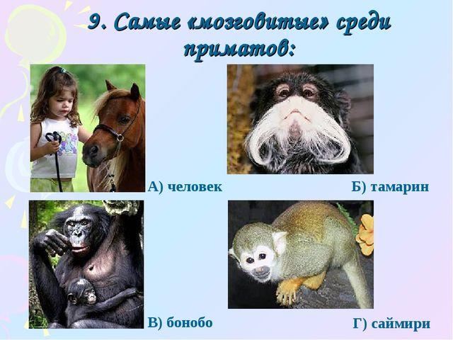 9. Самые «мозговитые» среди приматов: Г) саймири А) человек Б) тамарин В) бон...