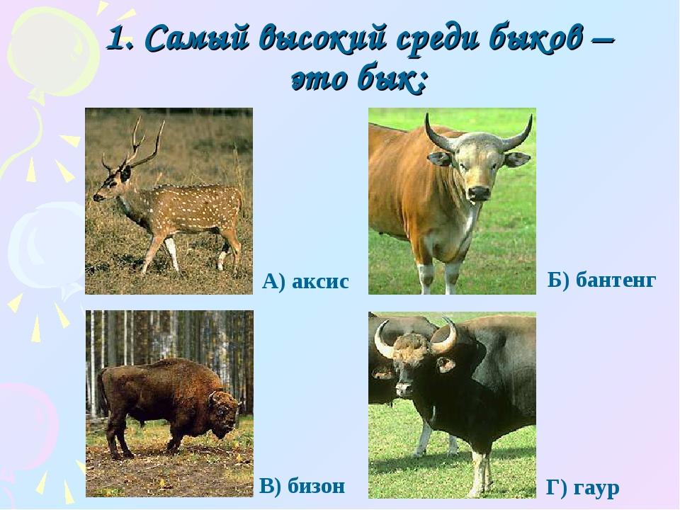 1. Самый высокий среди быков – это бык: Г) гаур А) аксис Б) бантенг В) бизон