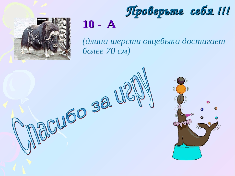 Проверьте себя !!! 10 - А (длина шерсти овцебыка достигает более 70 см)