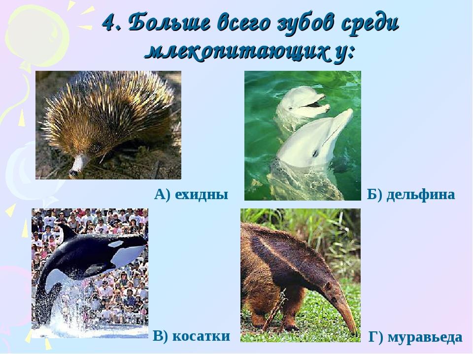 4. Больше всего зубов среди млекопитающих у: Г) муравьеда А) ехидны Б) дельфи...