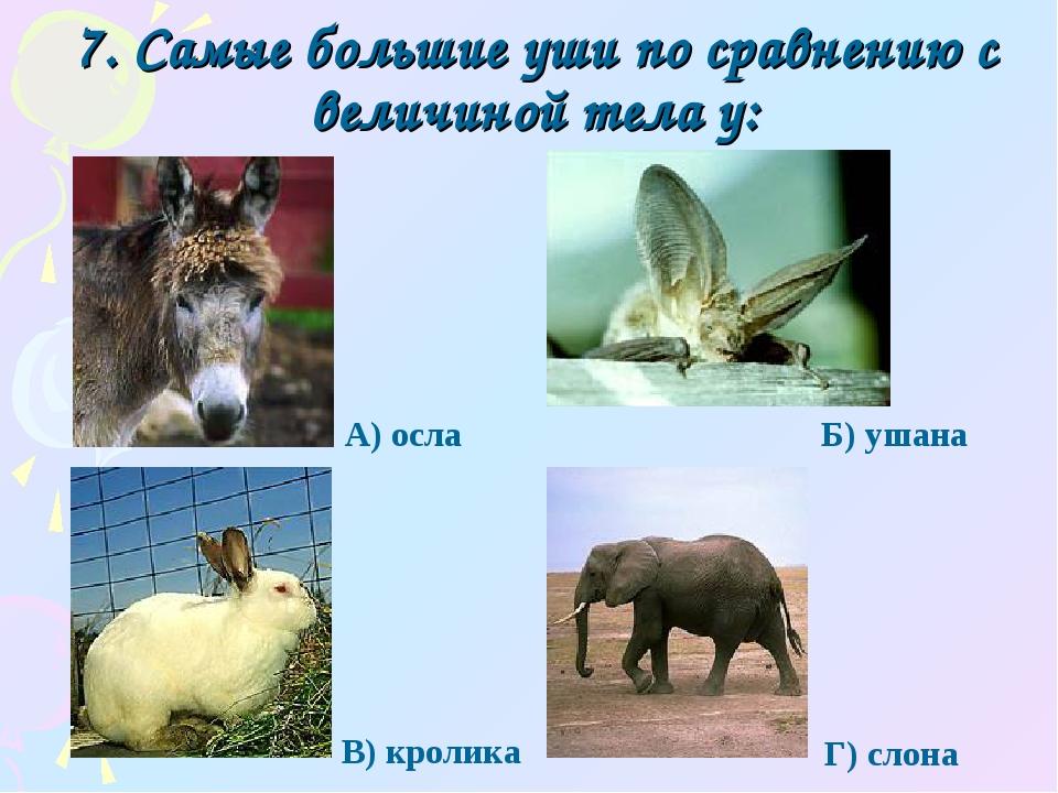 7. Самые большие уши по сравнению с величиной тела у: Г) слона А) осла Б) уша...