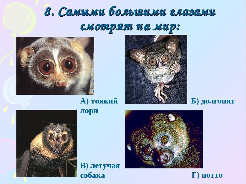 8. Самыми большими глазами смотрят на мир: Г) потто А) тонкий лори Б) долгопя...