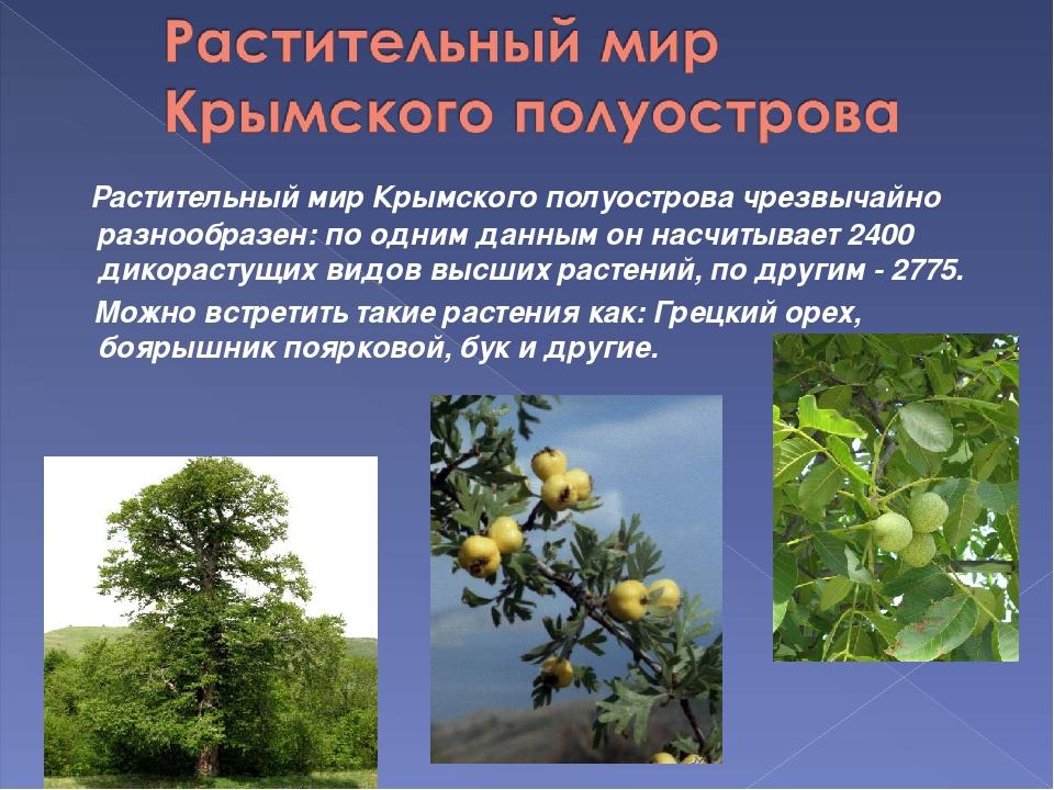 Растительный мир Крымского полуостровачрезвычайно разнообразен: по одним д...