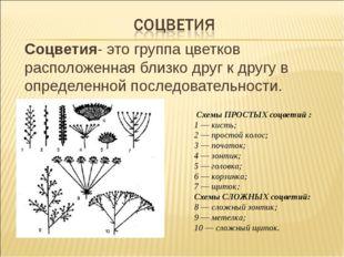 Соцветия- это группа цветков расположенная близко друг к другу в определенно