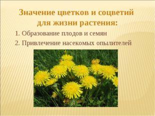 Значение цветков и соцветий для жизни растения: 2. Привлечение насекомых опыл
