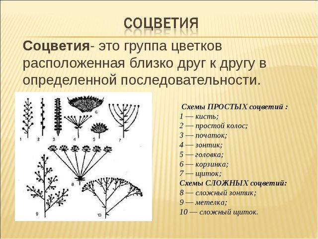 Соцветия- это группа цветков расположенная близко друг к другу в определенно...