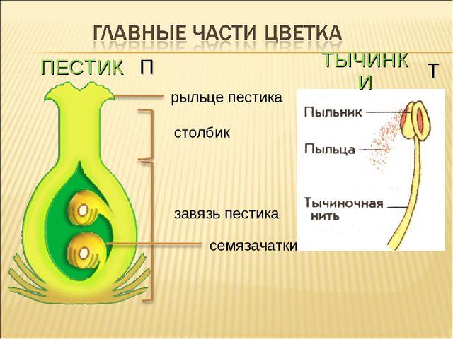 ПЕСТИК ТЫЧИНКИ П Т