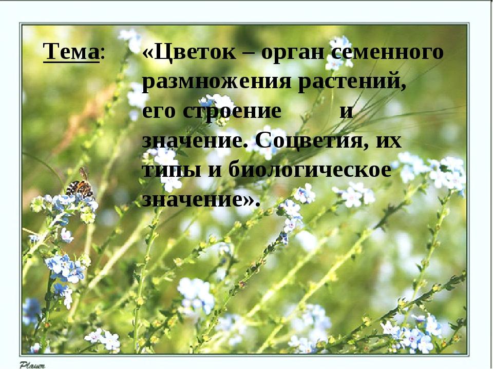 Тема: «Цветок – орган семенного размножения растений, его строение и...