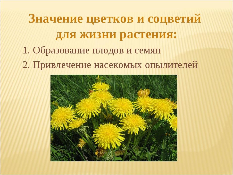 Значение цветков и соцветий для жизни растения: 2. Привлечение насекомых опыл...