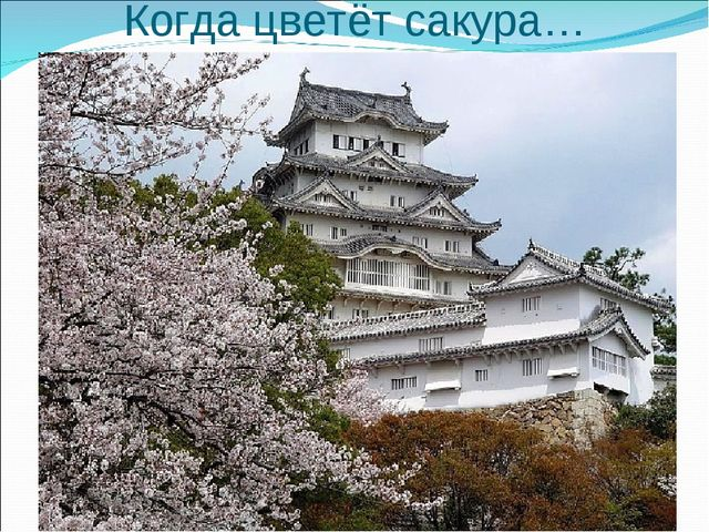 Когда цветёт сакура…