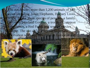 The zoo houses more than 1,200 animals of 140 species including Asian Elepha