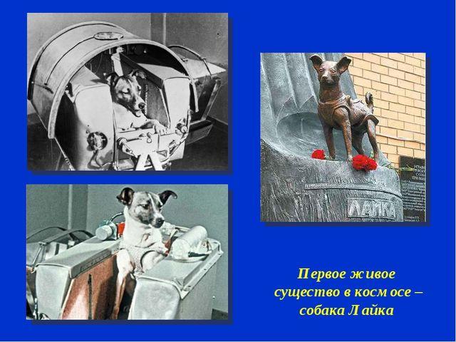 Первое живое существо в космосе – собака Лайка