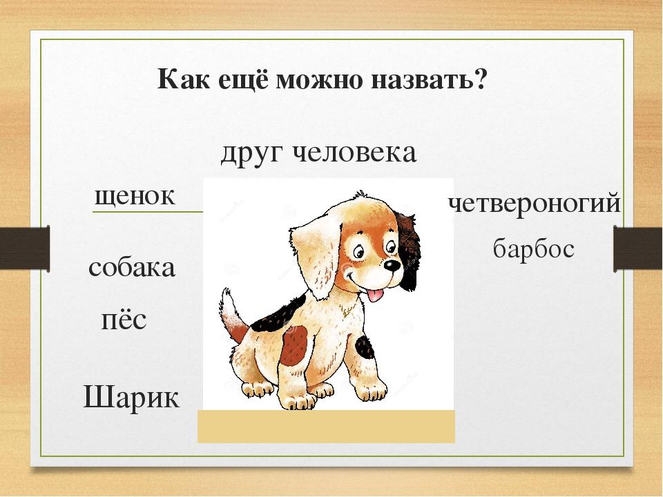 Как ещё можно назвать? Шарик щенок собака пёс друг человека четвероногий барбос