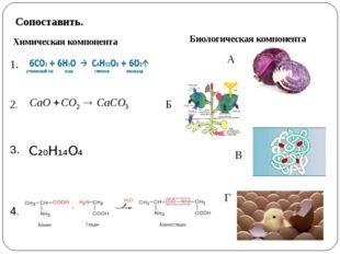 Сопоставить. Химическая компонента Биологическая компонента 1. 2. 4. 3. C₂₀H₁