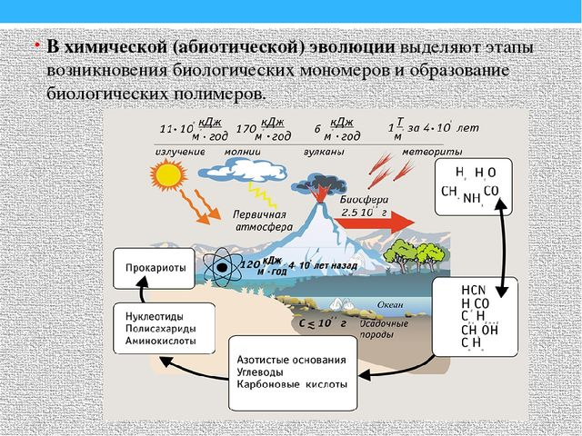 В химической (абиотической) эволюции выделяют этапы возникновения биологическ...
