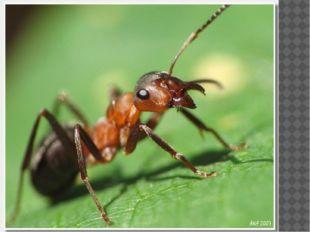 А вы когда были маленькими думали о том, как муравьи в огромном для них мире