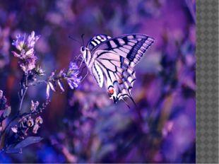 Благодаря диффузии, насекомые находят себе пищу. Бабочки, порхая меж растени
