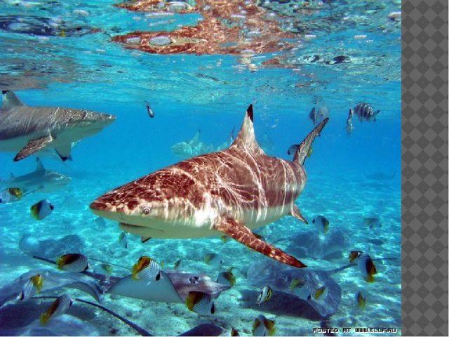 Плотоядные животные находят своих жертв тоже благодаря диффузии. Акулы чувст...