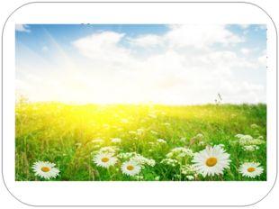 Весной в цветном сарафане лежит, зимой в белой рубашке спит. Из первых букв о