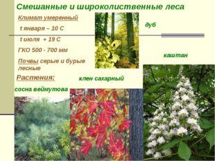 Климат умеренный t января – 10 С t июля + 19 С ГКО 500 - 700 мм Почвы серые и