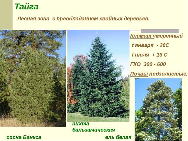 Тайга Лесная зона с преобладанием хвойных деревьев. Климат умеренный t января...
