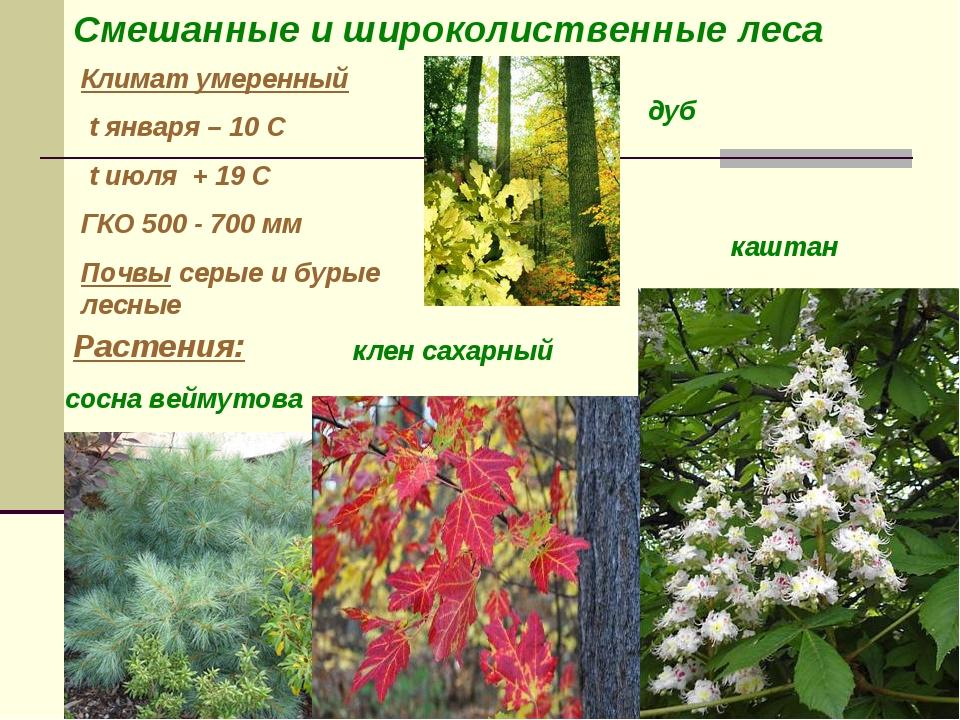 Климат умеренный t января – 10 С t июля + 19 С ГКО 500 - 700 мм Почвы серые и...