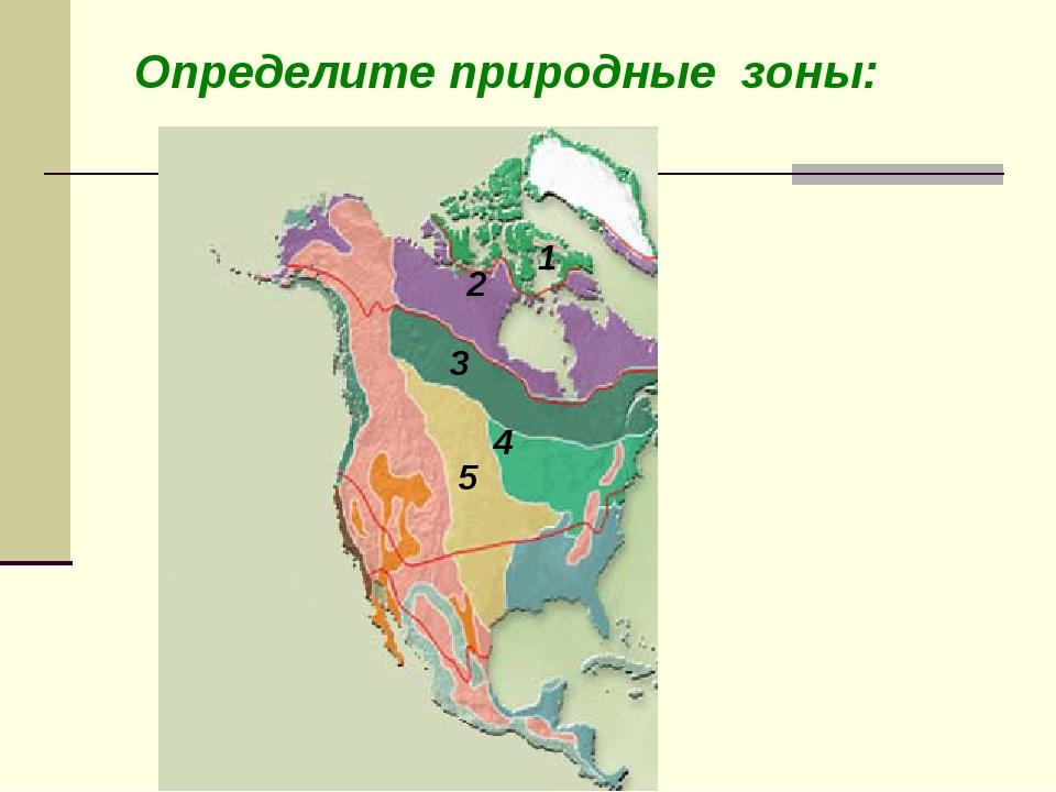 Определите природные зоны: Степи Тайга Тундра Арктические пустыни Смешанные и...