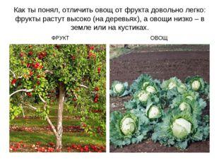 Как ты понял, отличить овощ от фрукта довольно легко: фрукты растут высоко (н
