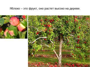 Яблоко – это фрукт, оно растет высоко на дереве.