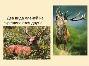 Два вида оленей не скрещиваются друг с другом , т.к. у них различные места о