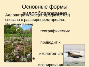 Основные формы видообразования Аллопатрическое(географическое) связана с расш