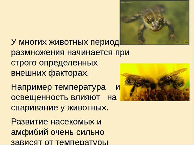 У многих животных период размножения начинается при строго определенных внеш...