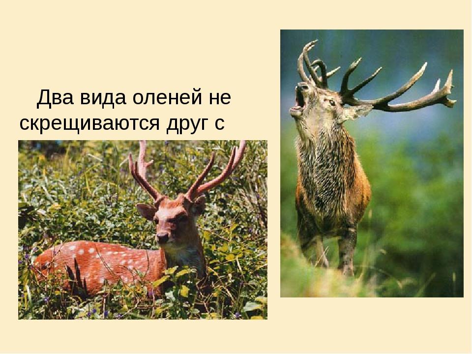 Два вида оленей не скрещиваются друг с другом , т.к. у них различные места о...