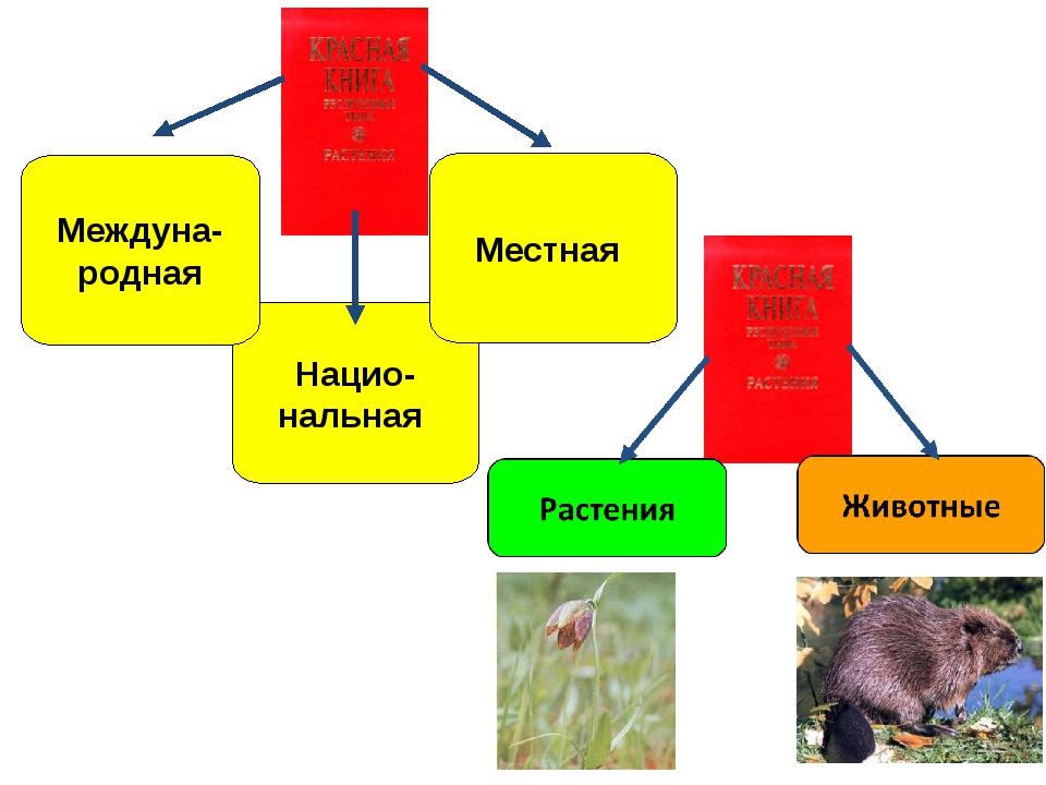 По страницам Красной книги начать