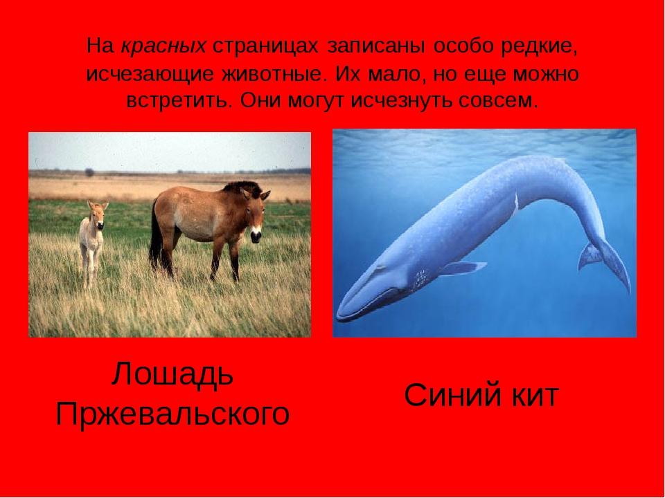 Гепард Полосатая гиена